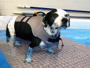 Canine Hydrotherapy Los Angeles
