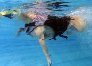 Swim Therapy Two Hands Four Paws Underwater