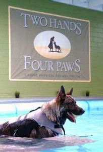 Two Hands Four Paws Pool For Dogs