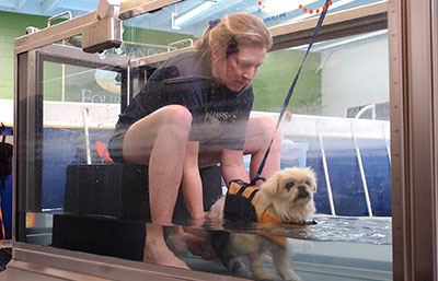 Underwater Treadmill Two Hands Four Paws Pekingese
