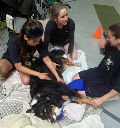 Customized Programs at Two Hands Four Paws