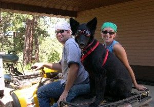 Leslie's Canine Rehab Blog- What's It Like Living With A Paralyzed Dog?