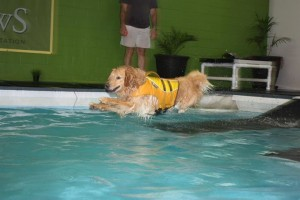 Swim Lessons For Dogs